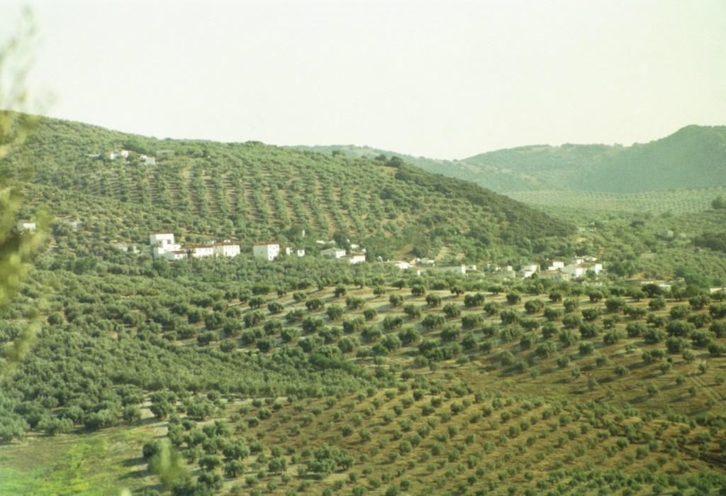 La Hortichuela